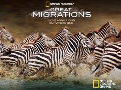 Great Migrations Poster